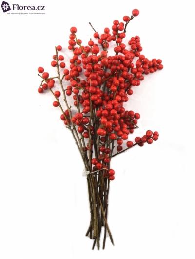 ILEX VERTICILLATA RED 30cm