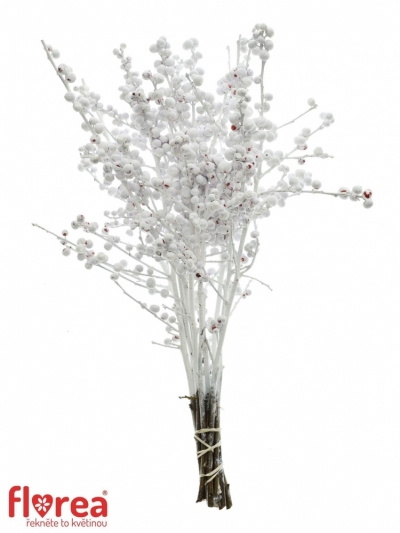 Ilex VERTICILLATA WHITE 40cm