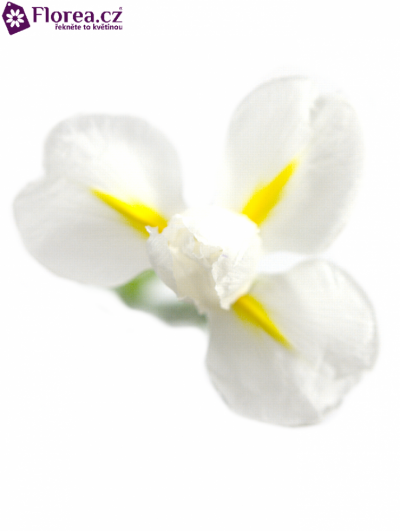 IRIS WHITE MAGIC 47cm/22g