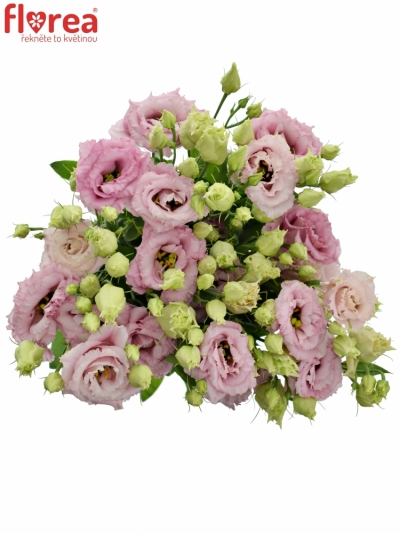 EUSTOMA G ALISSA LIGHT PINK 70cm/5+
