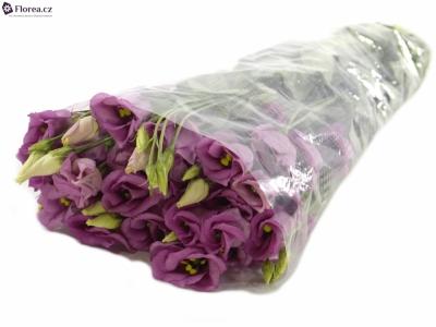 EUSTOMA PICCOLO ROSE 70cm/5+