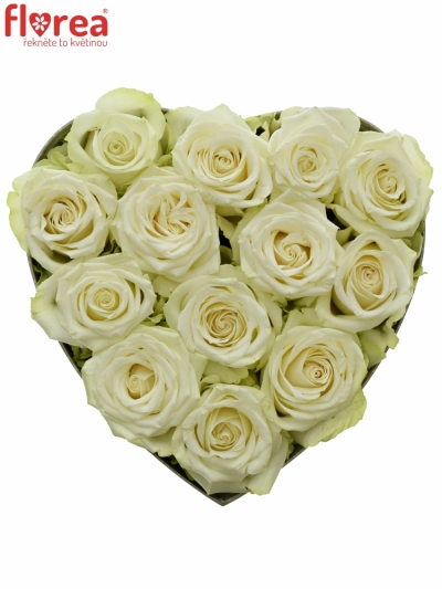 Krabička bílých růží ADALONIA šampaň 24x10cm