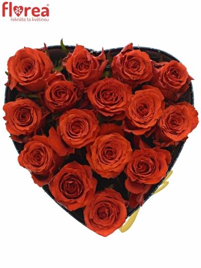 Krabička červených růží BRIGHT TORCH modrá 19x9cm