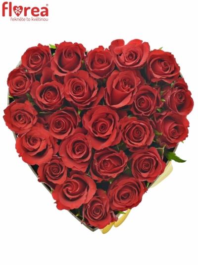 Krabička červených růží RED CALYPSO šampaň 15x8cm