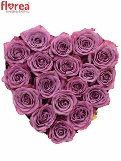Krabička fialových růží MOODY BLUES šampaň 24x10m