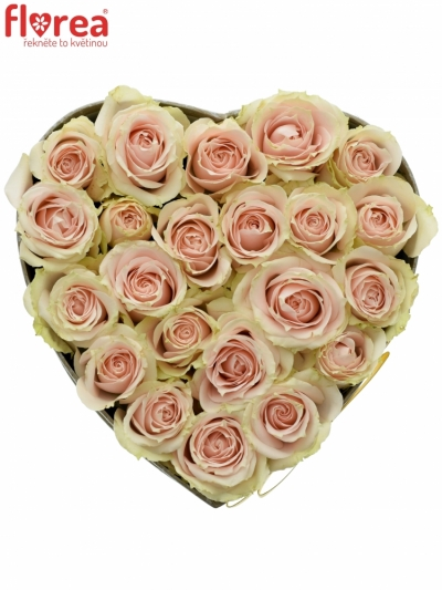 Krabička krémových růží JELENA šampaň 15x8cm