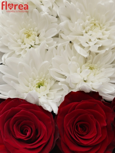 Krabička květin AHI šampaň 19x9cm