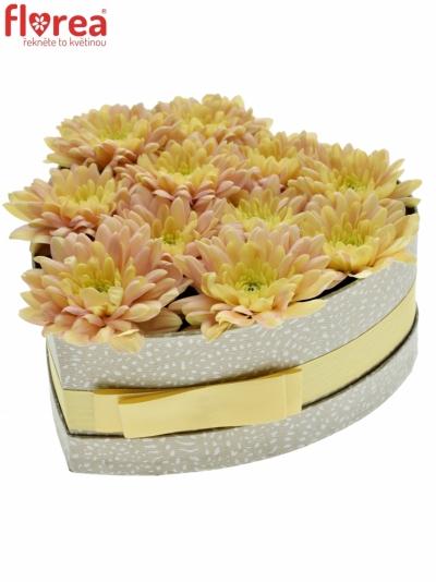 Krabička květin BALTICA SALMON šampaň 19x9cm