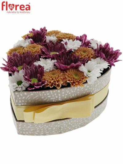 Krabička květin HAIGA šampaň 15x8cm