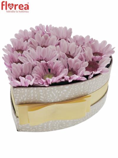 Krabička květin MEDUSA šampaň 15x8cm
