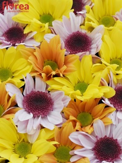 Krabička květin NADIA šampaň 24x10cm