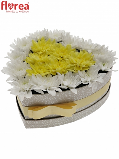 Krabička květin PINACOLADA šampaň 24x10cm