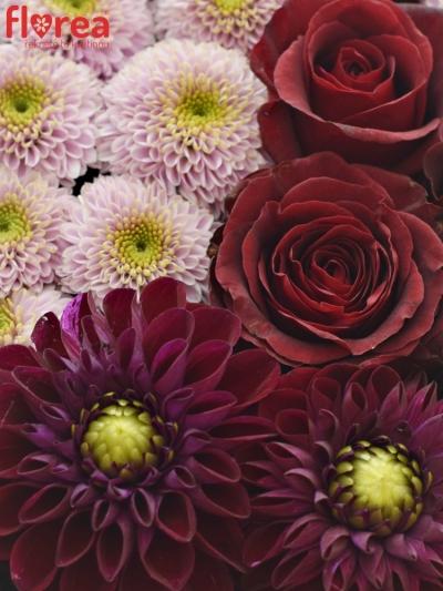 Krabička květin PINKFOX šampaň 19x9cm