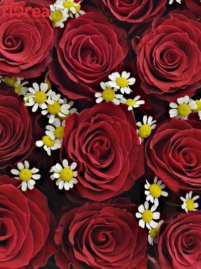 Krabička květin RHODENA červená 24x10cm