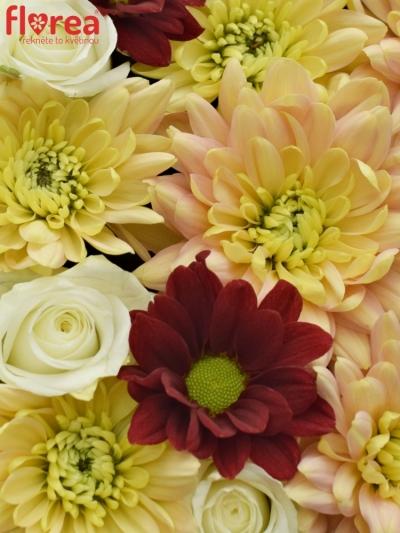 Krabička květin SALAMONA šampaň 19x9cm