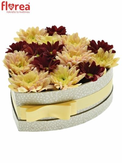 Krabička květin SALMONI šampaň 19x9cm