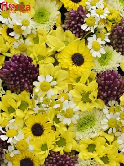 Krabička květin SPHAERO šampaň 19x9cm