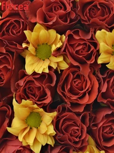 Krabička květin SUNLOTTE červená 19x9cm
