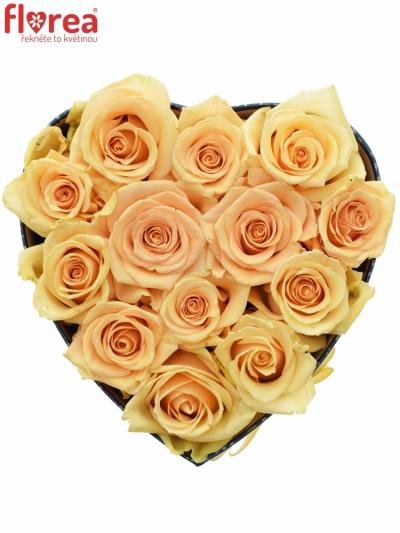 Krabička meruňkových růží PRIMA DONNA modrá 19x9cm