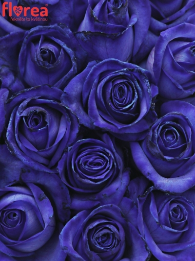 Krabička modrých růží BLUE VENDELA modrá 19x9cm