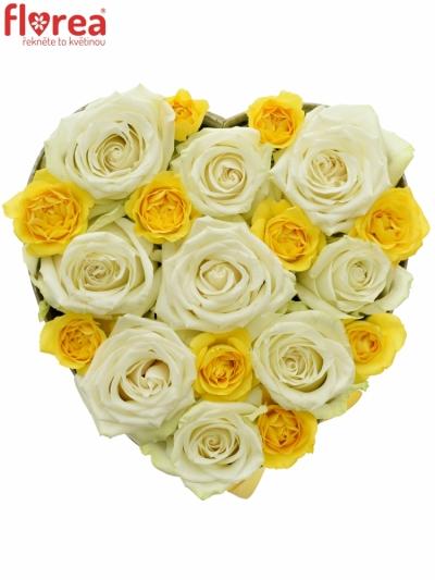 Krabička růží ADA YELLOW šampaň 19x9cm