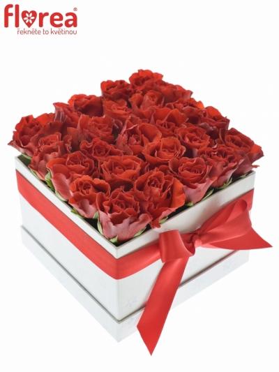 Krabička růží bílá CYTHERIA 16x11cm