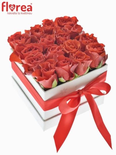 Krabička růží bílá DIONYSIE 12x9cm