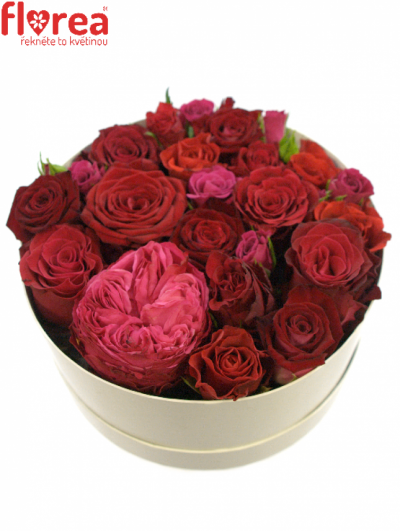 Krabička růží bílá MARLAS Ø20v10cm
