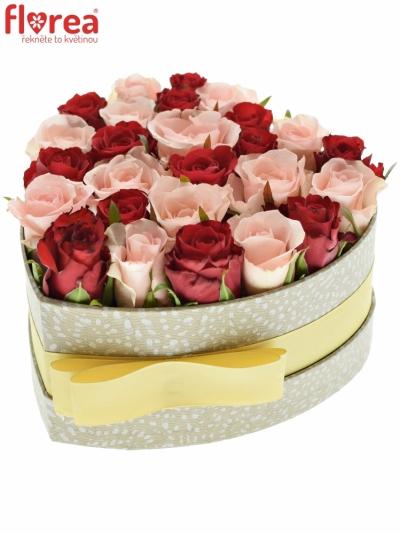 Krabička růží CALYPA šampaň 15x8cm