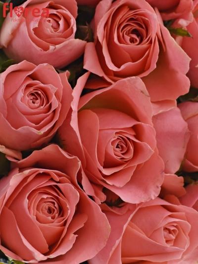 Krabička růží FEIWEL modrá 18x8cm