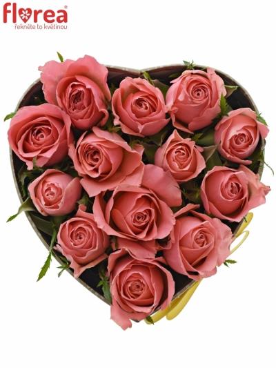 Krabička růží FEIWEL šampaň 15x8cm