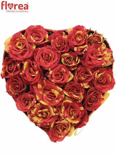 Krabička růží FIRE FLASH červená 15x8cm