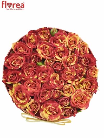 Krabička růží FIRE FLASH červená 18x8cm