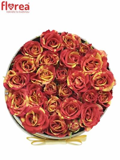 Krabička růží FIRE FLASH šampaň 13,5x8cm
