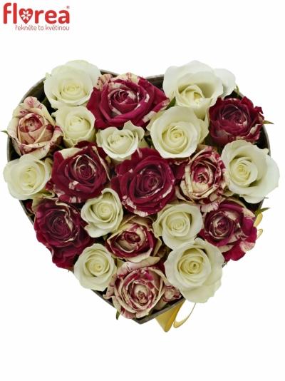 Krabička růží HARLESPEN šampaň 15x8cm