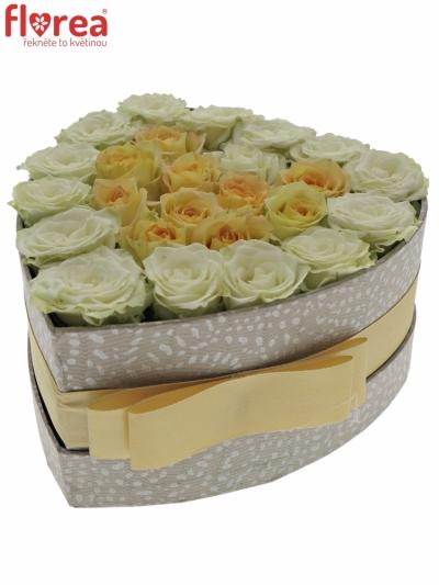 Krabička růží HEARTBEAT šampaň 15x8cm