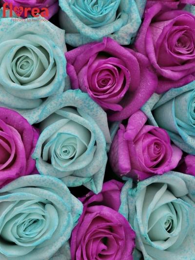 Krabička růží ICERISEA čampaň 19x9cm