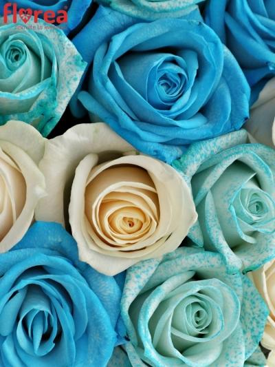 Krabička růží JITANA šampaň 19x9cm