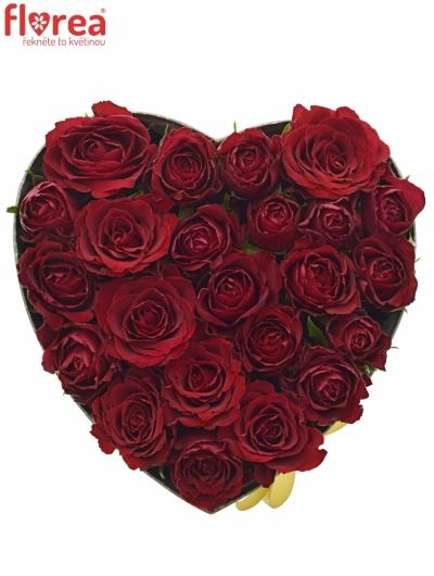 Krabička růží MADAM RED šampaň 24x10cm