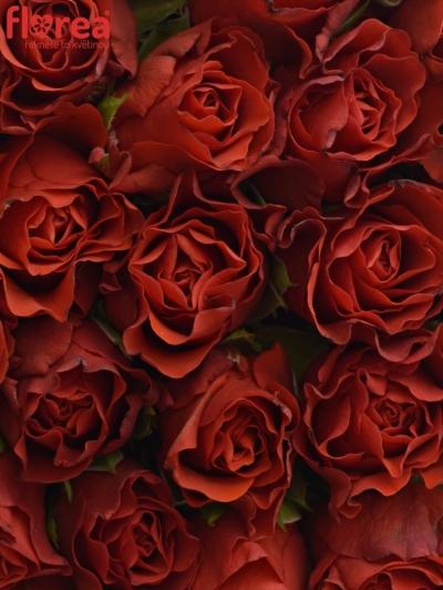 Krabička růží na Den Matek 2019 - 02