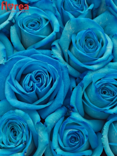 Krabička růží na Den Matek 2019 - 06