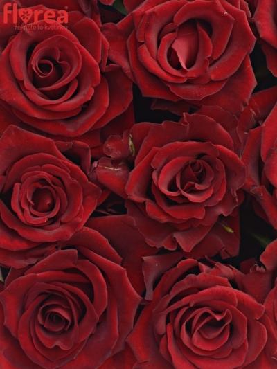 Krabička růží na Den Matek 2019 - 07