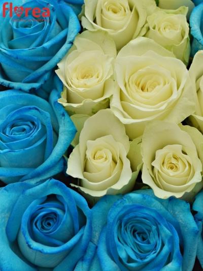 Krabička růží na Den Matek 2019 - 20