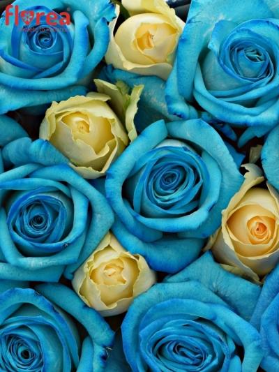 Krabička růží na Den Matek 2019 - 21