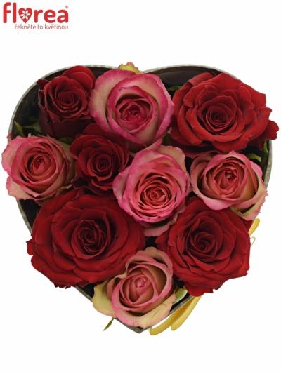 Krabička růží ODETTE šampaň 15x8cm