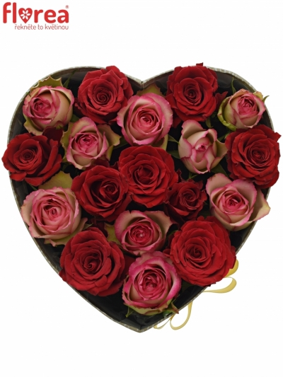 Krabička růží ODETTE šampaň 24x10cm