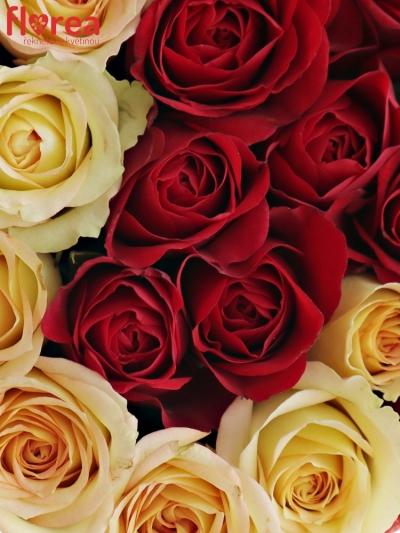 Krabička růží OFIRA červená 15x8cm