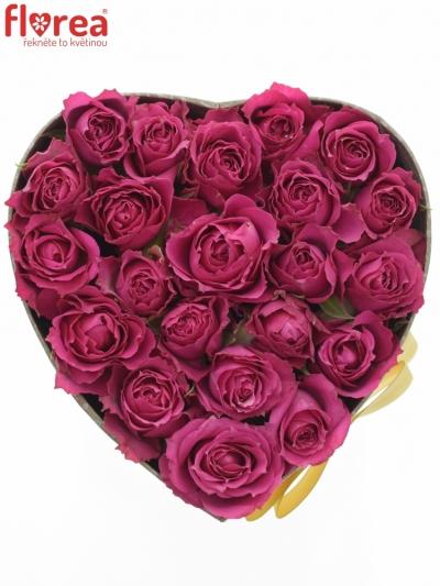 Krabička růží PURPLE IRISCHKA  šampaň 15x8cm