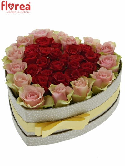 Krabička růží ROSEBELLINE šampaň 24x10cm