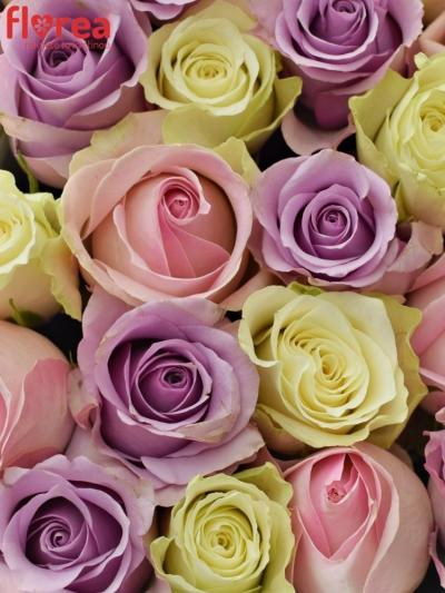 Krabička růží SANDRIA šampaň 24x10cm